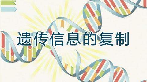 遗传信息的复制